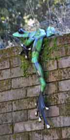 frog on wall by Tim Cotterill