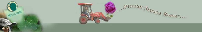 walter on tractor with rose